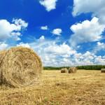 harvest landscape 150x150 - A nice post